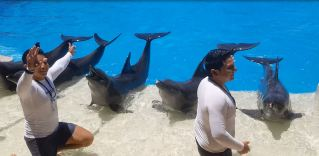 The dolphin say thank you for coming to our show!