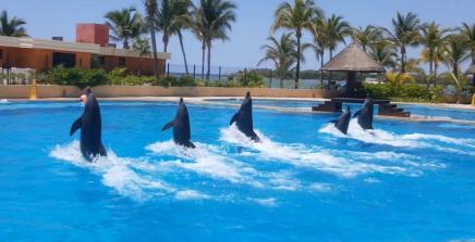 dolphin show!
